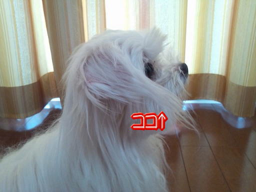 20120905 006