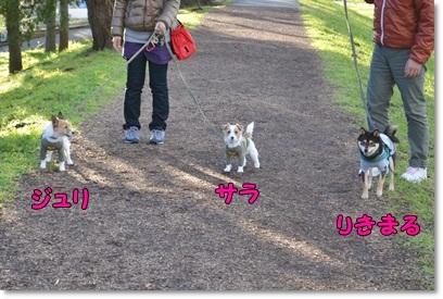 DSC_0007_20130107004914.jpg