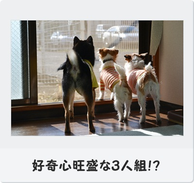 DSC_0141_20130107005203.jpg