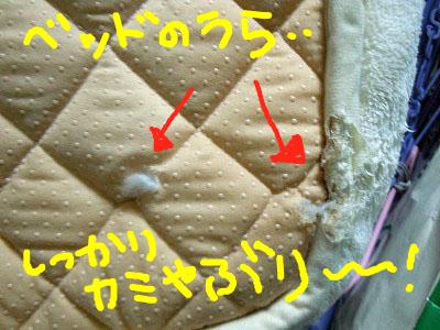 snap_rikineechan_201211124952.jpg