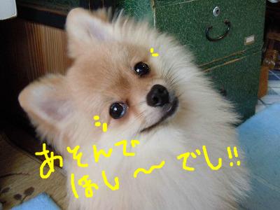 snap_rikineechan_2012933385.jpg