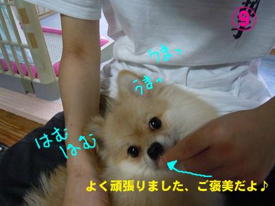 snap_rikineechan_20129352812.jpg