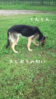 201206201106464f9.jpg