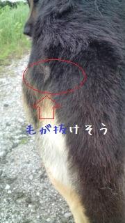20120621143303870.jpg