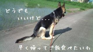 2012070809122433a.jpg