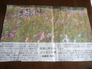 1012aonekosu1.jpg