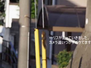 1026jyuugatuzarisu1.jpg