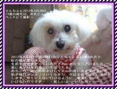 _P1700429-1お礼文字waku3