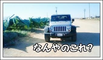 IMG_2145 (1)