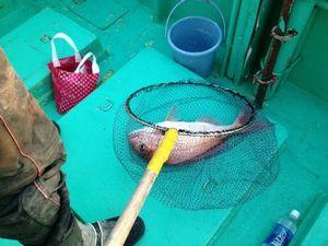 真鯛 45センチ