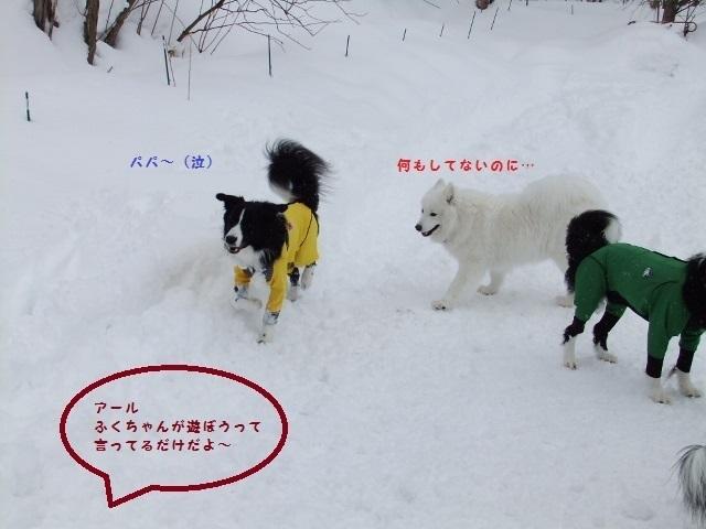 DSCF3742_20130313155924.jpg
