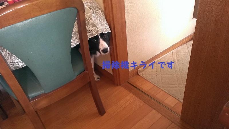 IMAG0102.jpg