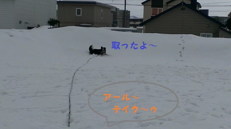 IMAG0125.jpg