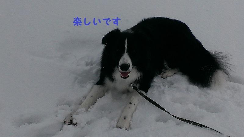 IMAG0143.jpg