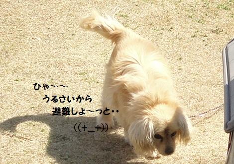 DSC06716.jpg