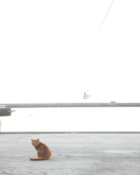 itoshimaにゃんちう