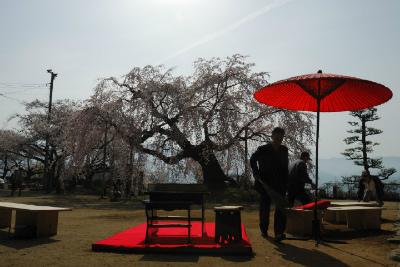 飯田市の坐光寺の麻績神社のしだれ桜
