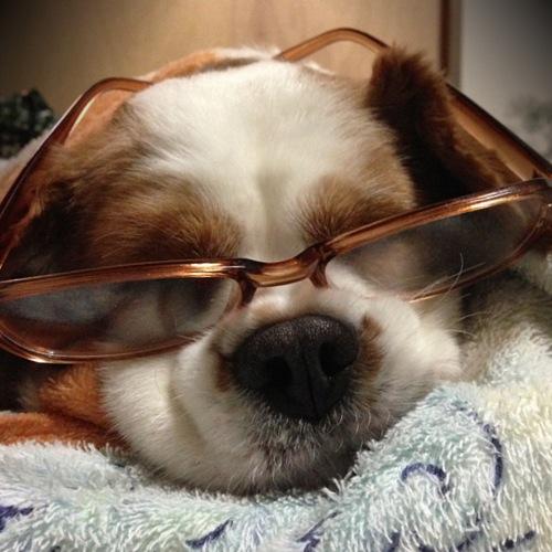 アメリカンアンティーク&ヴィンテージ照明 ライティング ランプ 看板犬 キャバリア