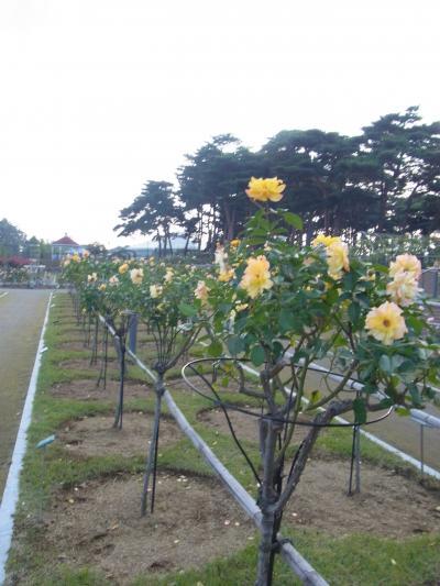 敷島公園11月