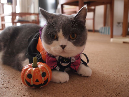かぼちゃ君も大変だね