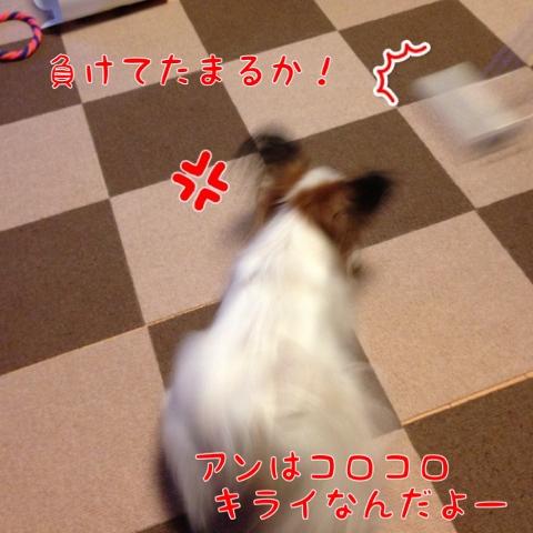 IMG_0665 (480x480)