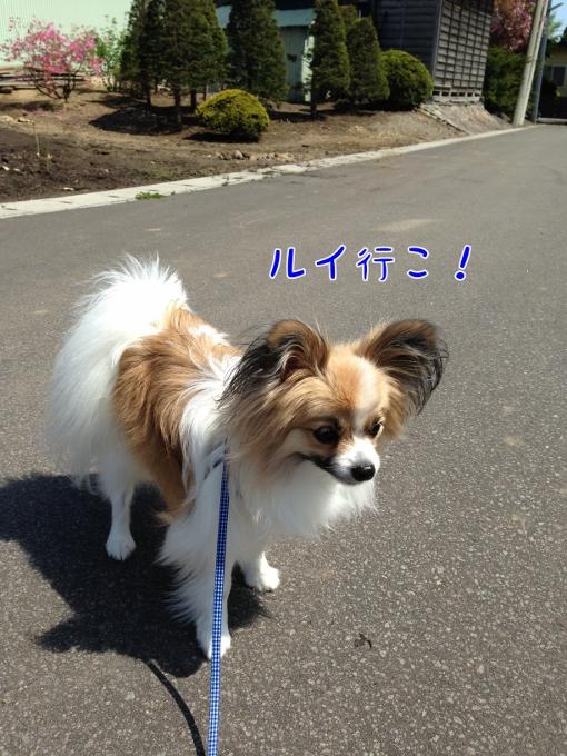 IMG_2558 (510x680)