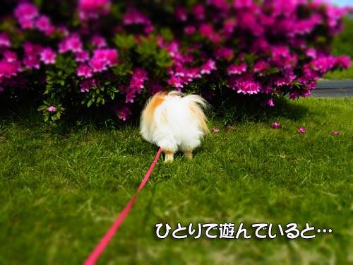20120516_11.jpg