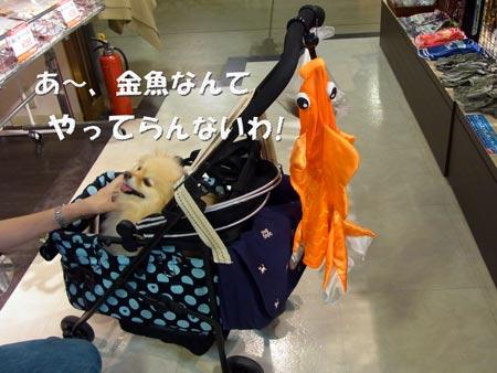 20120610_6.jpg