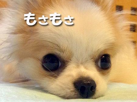 20120703_11.jpg