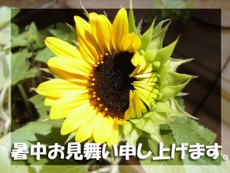 20120718_16.jpg