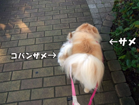 20120718_4.jpg