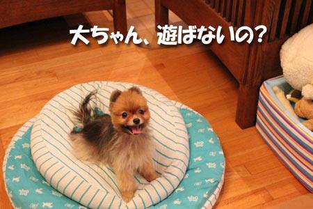 20120807_10.jpg