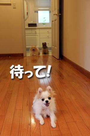 20120807_3.jpg