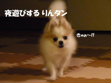 20120829_9.jpg