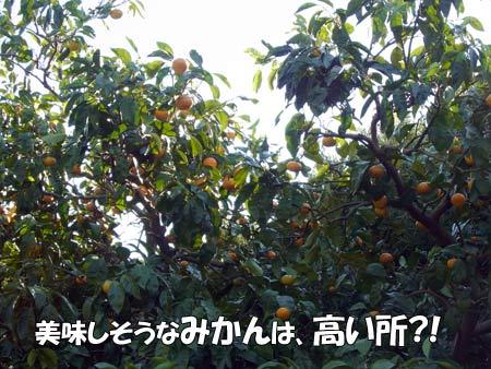 20121209_21.jpg