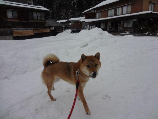 白川雪遊び2