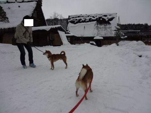 白川雪遊び1