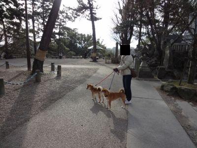 岡崎城 5