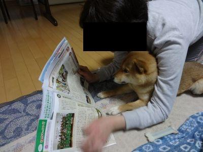 本を読む柴犬1