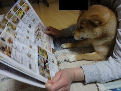 本を読む柴犬2