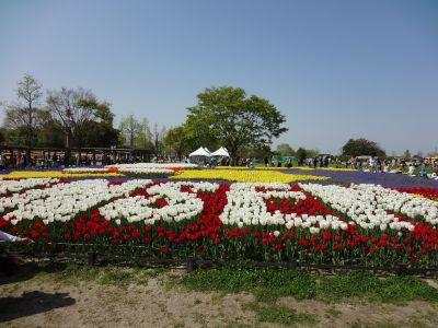 チューリップ祭り 1