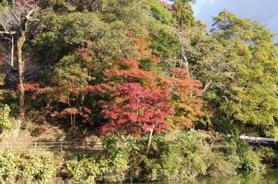 亀山公園1