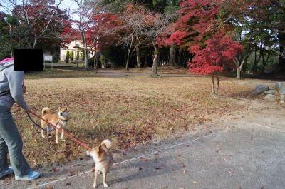 亀山公園5