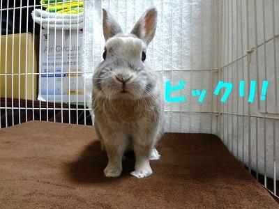 1_20130122021205.jpg