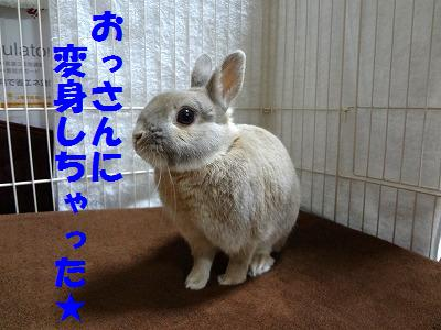 2_20130107164143.jpg