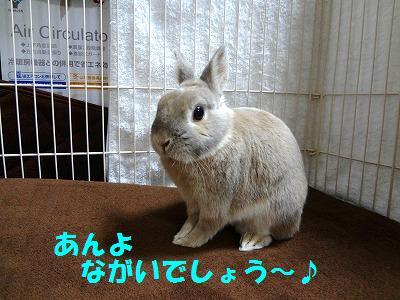 3_20130115033535.jpg