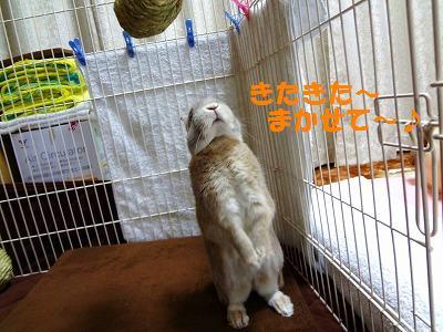 3_20130123010403.jpg