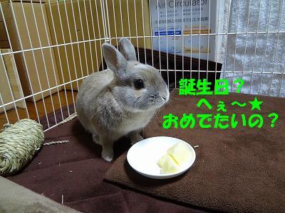 4_20130110021934.jpg