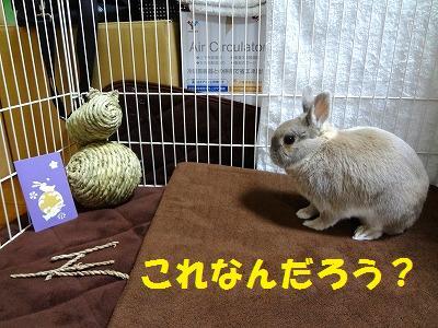7_20130115004249.jpg