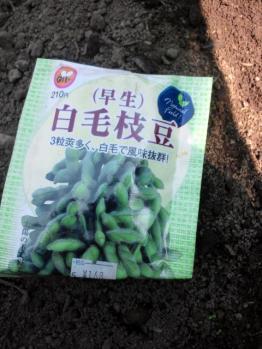 20120428枝豆
